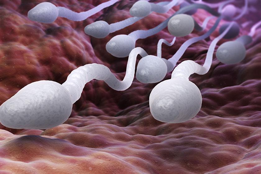 Sperm Sağlığınızı Korumak İçin Bu Maddeleri Gözden Geçirin